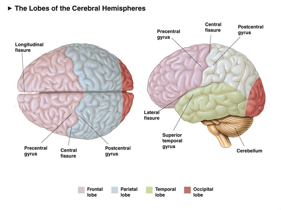 Brainwaves and Lobes - 121 Neurofeedback Services